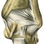 Illustration - Ligaments of the ankle