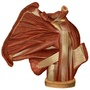 Illustration - Muscles of the shoulder joint